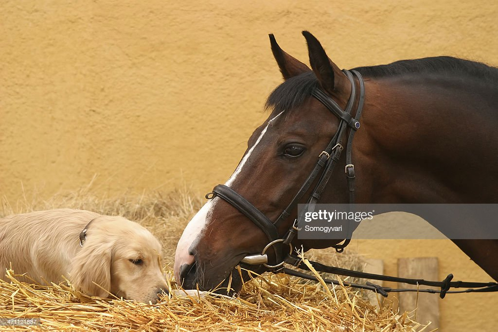Horse and dog first meet : Stock Photo