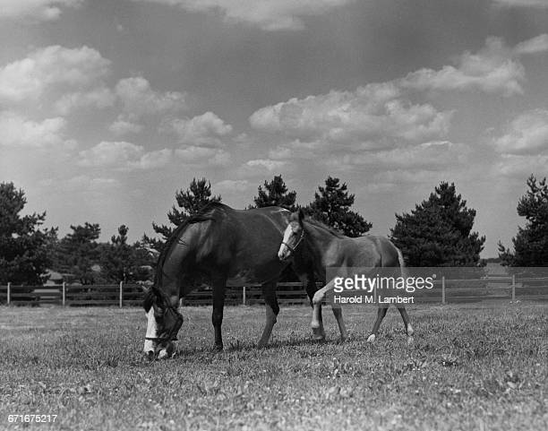 horse and foal grazing grass  - {{relatedsearchurl(carousel.phrase)}} ストックフォトと画像