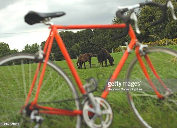 Horse And Foal Grazing On Field Seen Through Bicycle