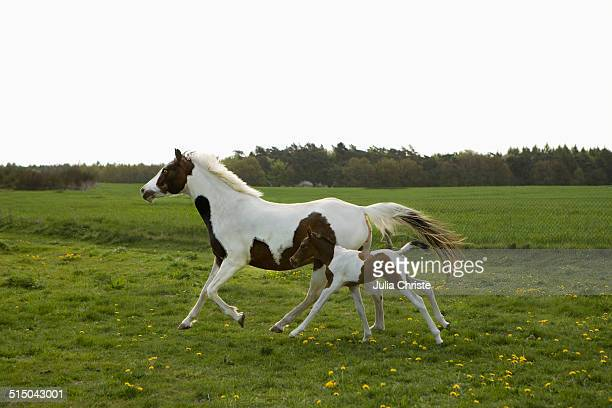 60 Top Foal Pictures Photos Images Getty Images