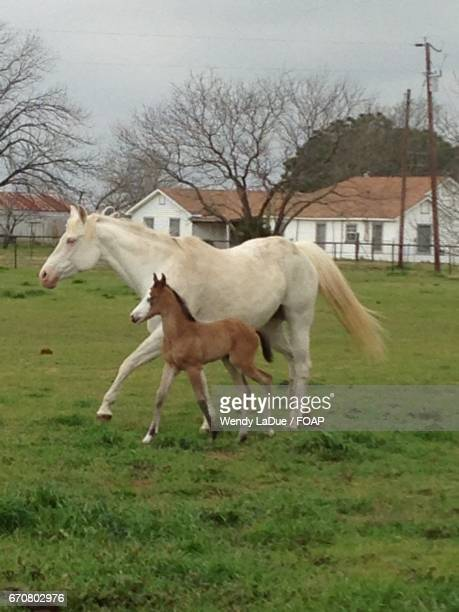 Horse and foal running on grassy field
