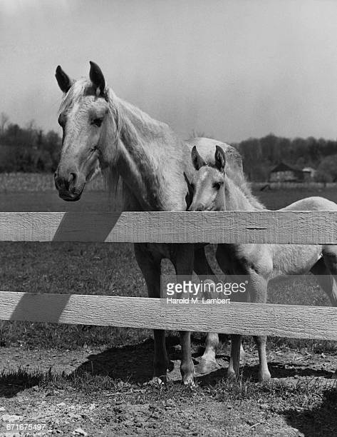 horse and foal standing in ranch  - {{ collectponotification.cta }} foto e immagini stock