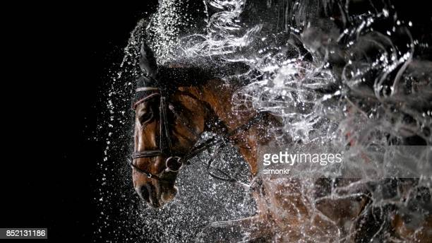 Horse and his rider jumping through water curtain