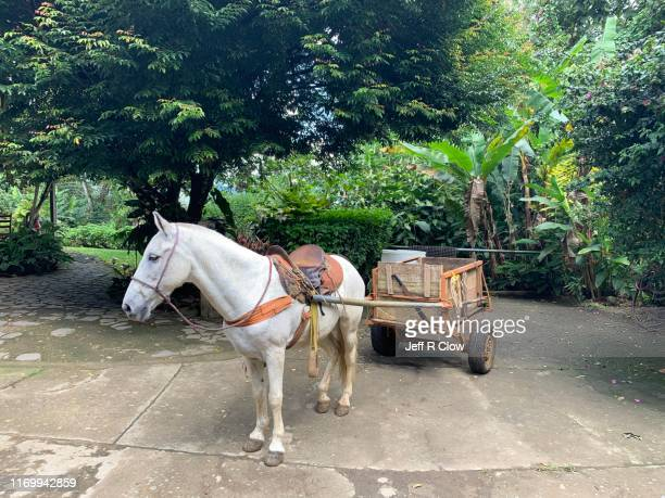 horse and horse drawn cart - koets stockfoto's en -beelden