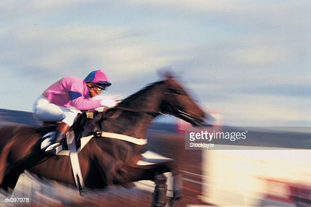 horse and jockey - steeplechasing horse racing stock photos and pictures