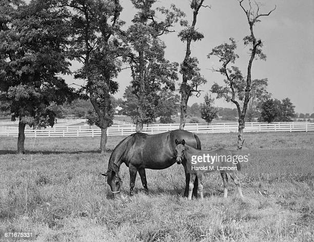 horse and pony grazing on landscape - {{relatedsearchurl(carousel.phrase)}} stock pictures, royalty-free photos & images