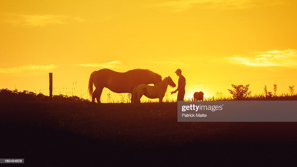 Horse and pony silhouette : Stock Photo