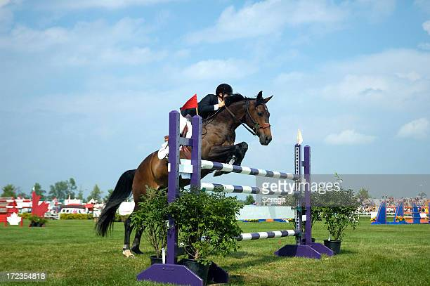 Horse and rider jumping over purple and white striped poles