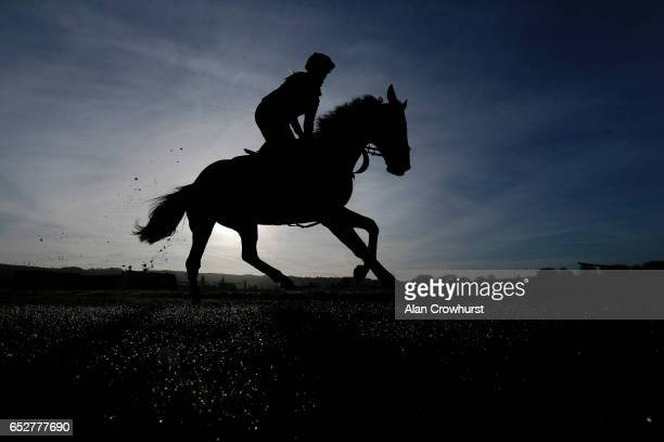 A horse and rider on the gallops as morning dew sits on the grass prior to the upcoming Cheltenham festival starting on Tuesday on March 13 2017 in...
