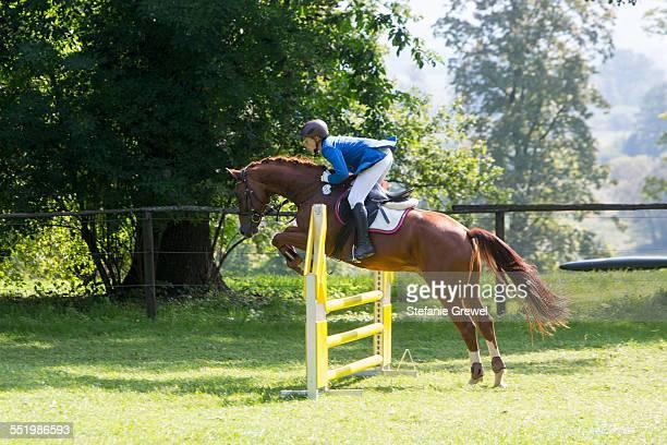 horse and rider show jumping - stefanie grewel stock-fotos und bilder