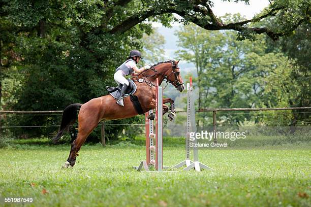 horse and rider show jumping - equestrian event stock pictures, royalty-free photos & images