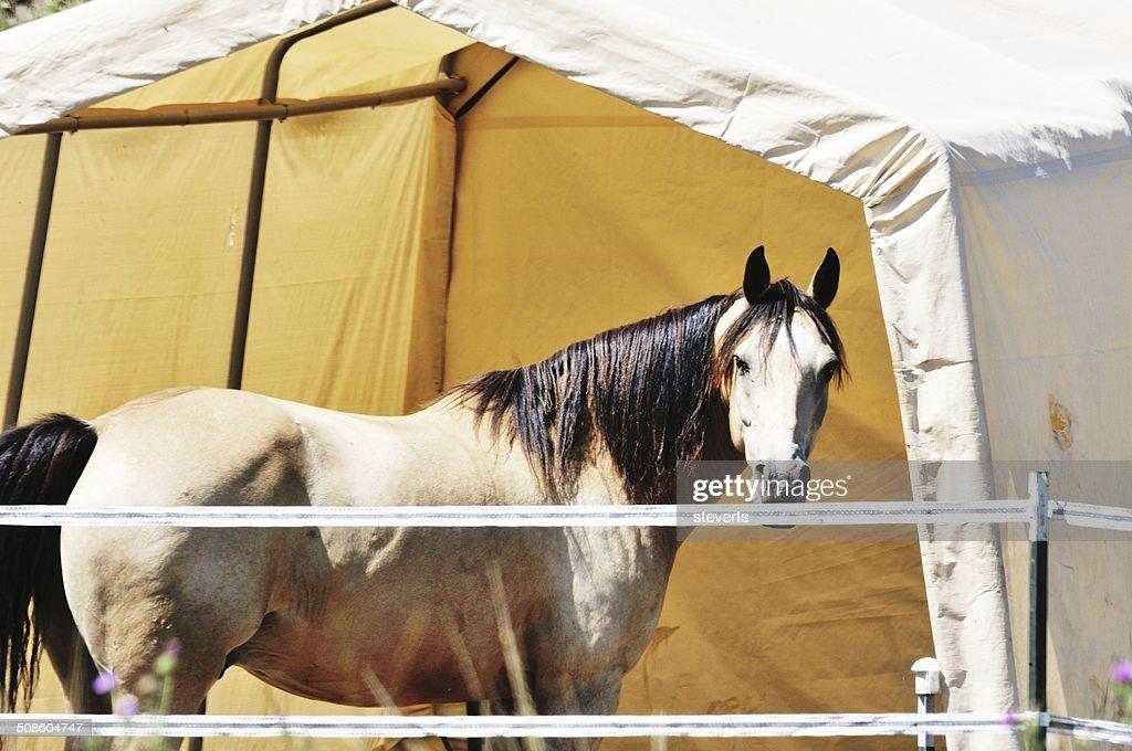 Horse y carpa : Foto de stock
