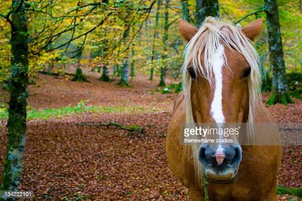 Horse at Irati