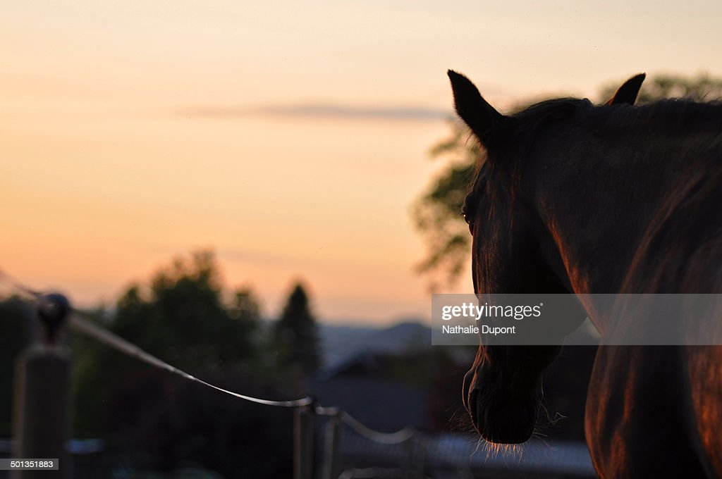 Horse at sunset : Stock Photo