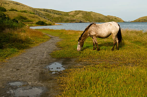 Horse at the lake