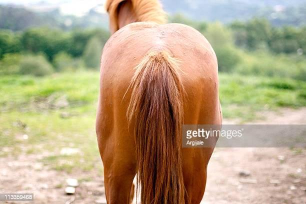 horse back - schwanz stock-fotos und bilder