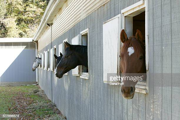 horse barn with horse heads sticking out of the windows - ranch stock pictures, royalty-free photos & images