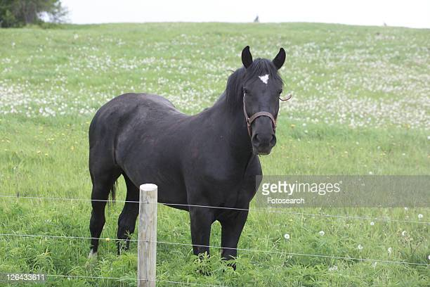 Horse behind a wire fence