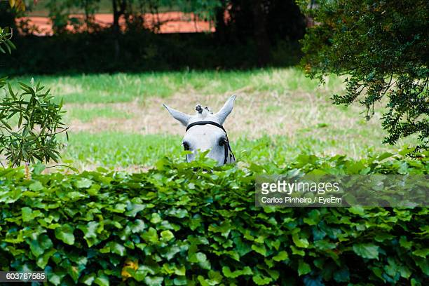 Horse Behind Plants On Grassy Field