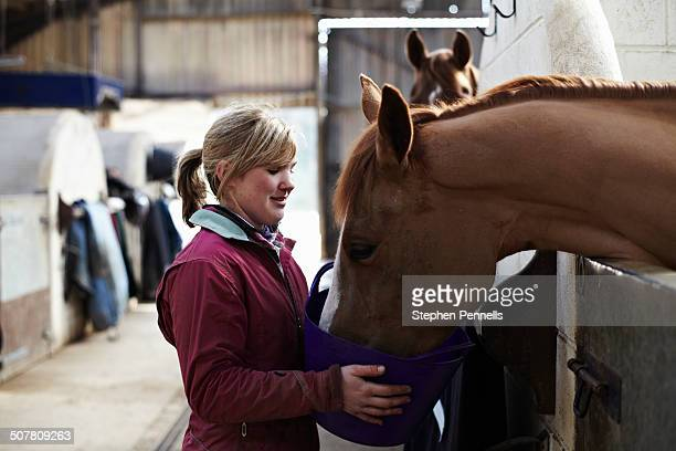 Horse being fed in stables
