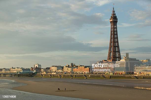 horse being lunged on blackpool beach with tower in background, on england's north east coast - blackpool stock photos and pictures
