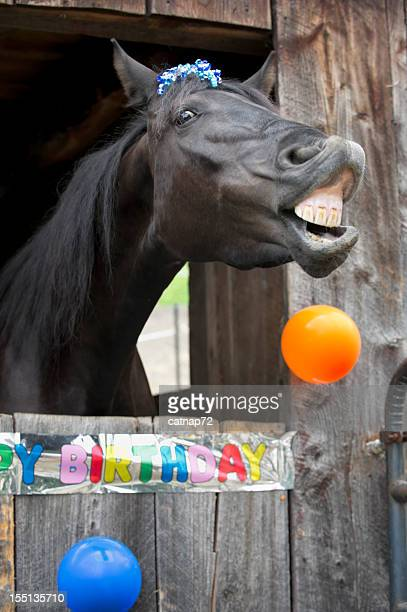 horse birthday party portrait, toothy grin - horse teeth stock photos and pictures