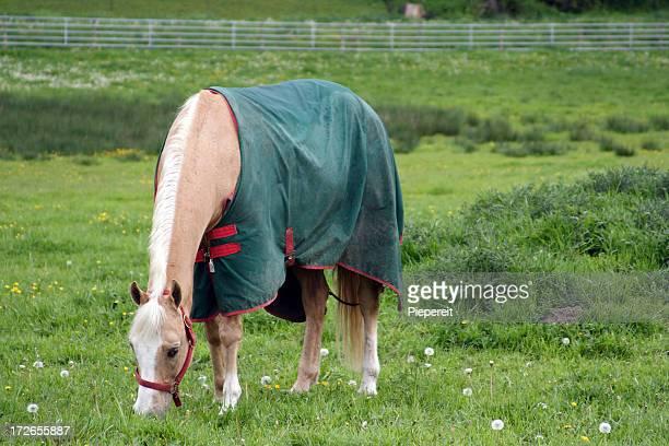 Horse Blanket 0001