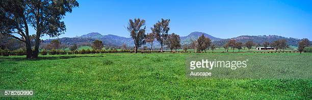 Horse breeding country Scone is known as the Horse Capital of Australia Scone New South Wales Australia