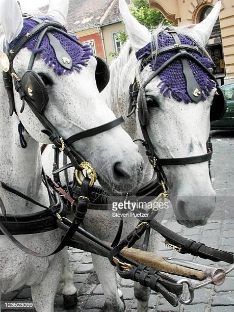 Horse, Budapest, Hungary