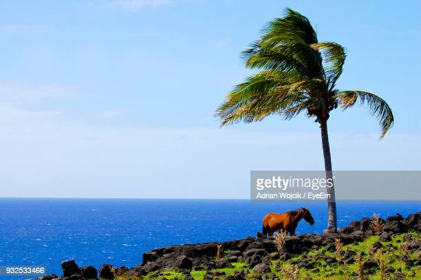 Horse By Palm Tree On Cliff By Sea Against Clear Sky