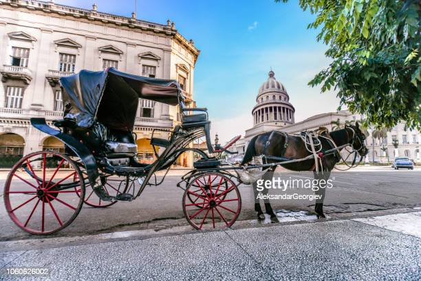 horse car near the el capitolio in havana, cuba - old havana stock pictures, royalty-free photos & images