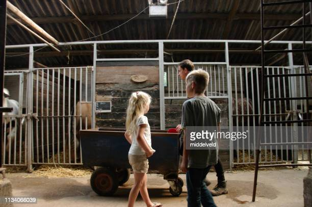 horse care - horsedrawn stock pictures, royalty-free photos & images