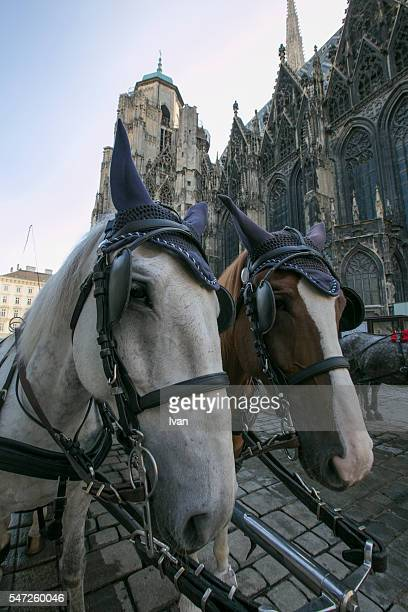 Horse Carriage at the St. Stephen's Cathedral, Vienna