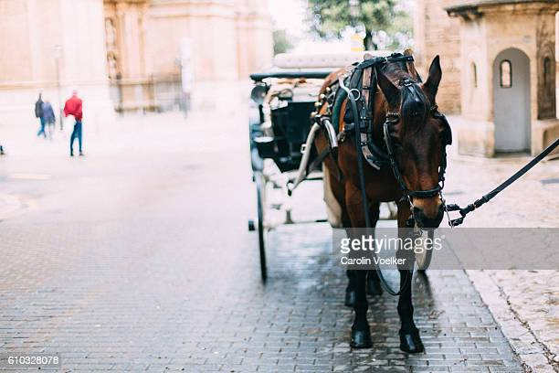 horse carriage resting in a paved street in palma de mallorca - horsedrawn stock pictures, royalty-free photos & images