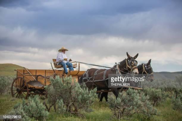 horse carriage utah - mula imagens e fotografias de stock