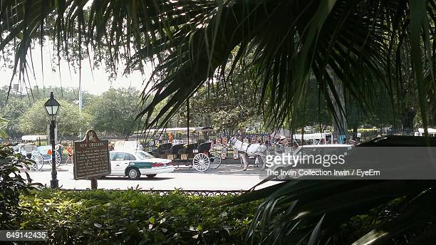 horse cart and cars on road seen through tree - eyeem collection stock photos and pictures