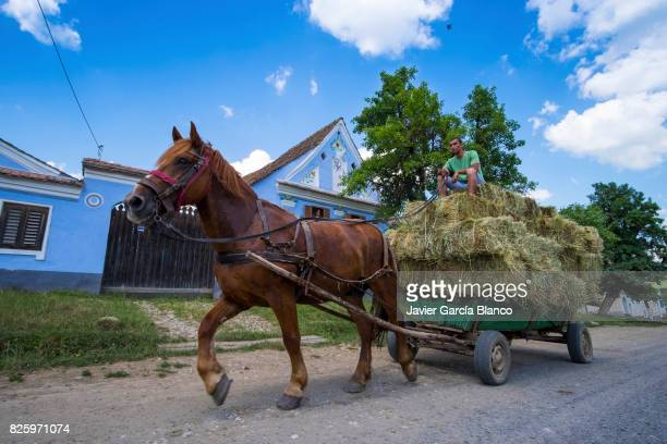 Horse cart in Romania