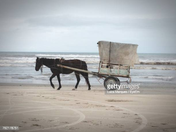 Horse Cart On Beach In Brazil