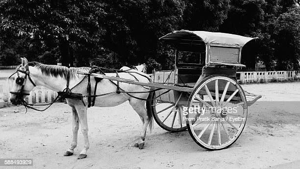 Horse Cart On Field Against Trees