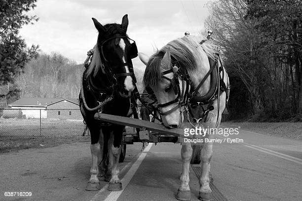 Horse Cart On Road