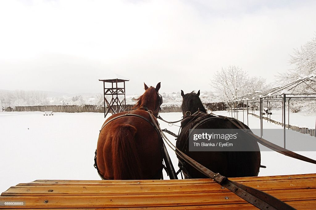 Horse Cart On Snow Covered Field Against Clear Sky : Stock Photo