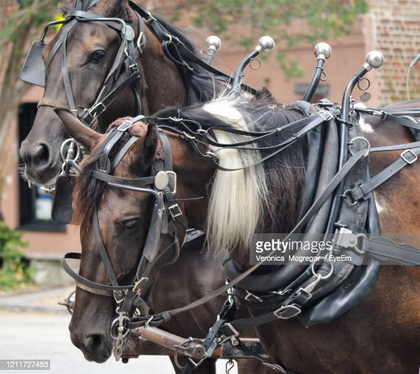 horse cart on street - mcgregor stock pictures, royalty-free photos & images