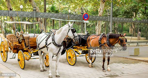Horse Carts On Street Against Trees