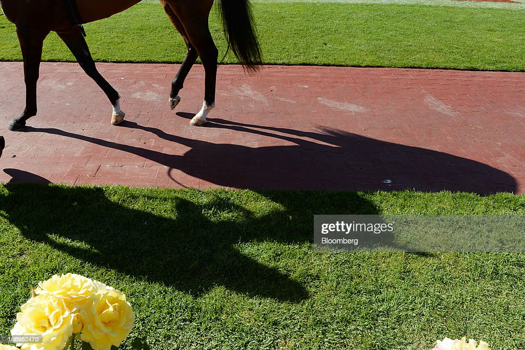 A horse casts a shadow as it is led around the yard during Melbourne Cup Day at Flemington Racecourse in Melbourne, Australia, on Tuesday, Nov. 5, 2013. The Melbourne Cup, marketed as the race that stops the nation, is Australias premier thoroughbred horse racing event. Photographer: Carla Gottgens/Bloomberg via Getty Images