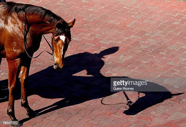 A horse casts a shadow in the mounting yard during the Memsie Stakes Day held at Caulfield racecourse on September 1 2007 in Melbourne Australia