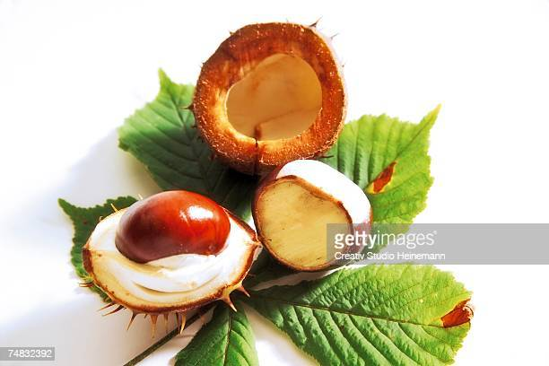 horse chestnut halves (aesculus hippocastanum) elevated view, close-up - picture of a buckeye tree stock photos and pictures
