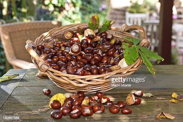 horse chestnuts or conkers (aesculus hippocastanum) with chestnut leaves, seeds and capsules in a wicker basket - picture of a buckeye tree stock photos and pictures