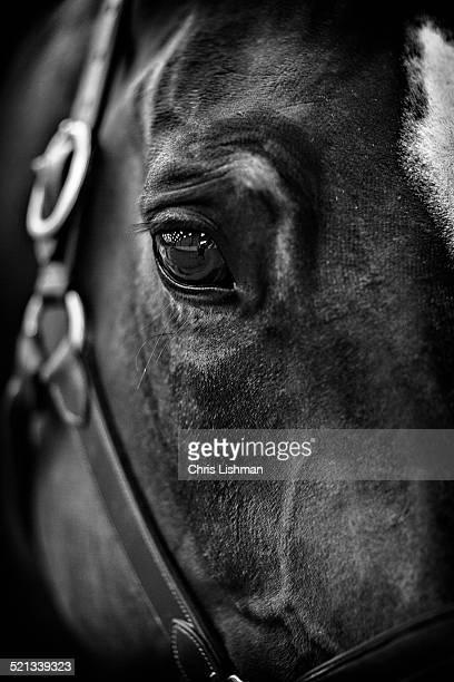 horse close up - モーペス ストックフォトと画像