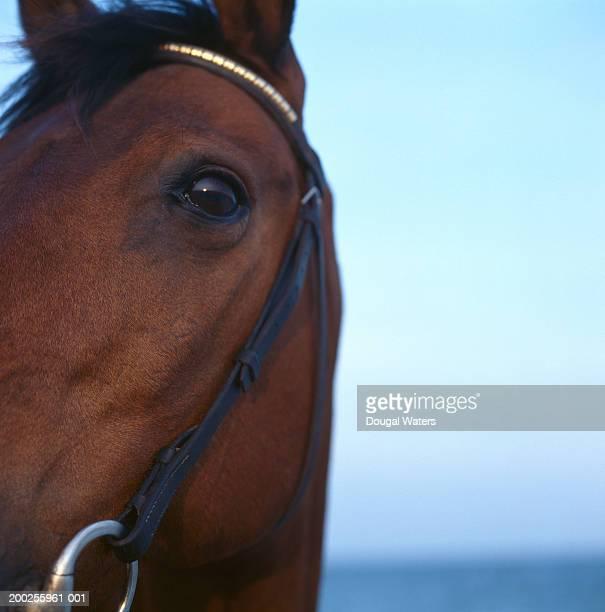 Horse, close-up