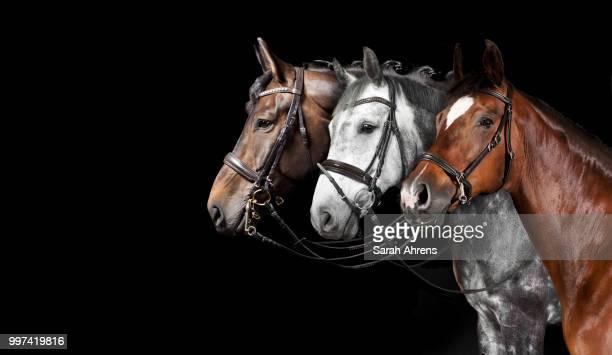 Horse collage black background